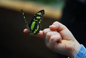 Wittenberg im Sommer - Alaris Schmetterlingspark