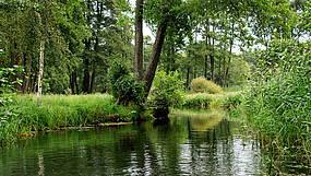 Wittenberg im Sommer Biosphärenreservat