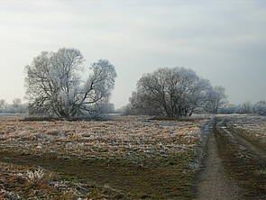 Wittenberg im Winter